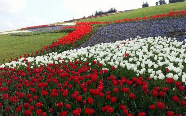 Landscape applications authorised by Denizli Metropolitan Municipality